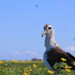 Photo: Albatross